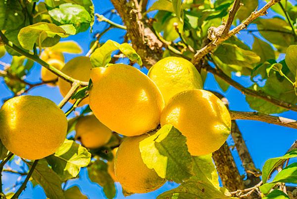 limoncello di siracusa mangano liquori tipici siciliani
